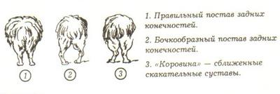 Из книги Л. Ковадло и Е. Кудрявцевой