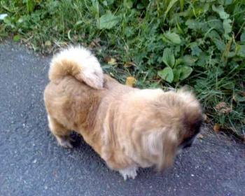 Фото и собака Galzi