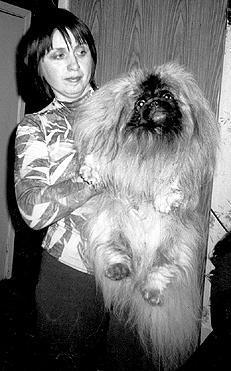Как правильно взять на руки щенка пекинеса